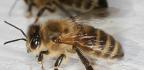Na bodnutí hmyzem mast s kortikoidem