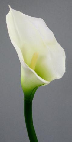Kala v květináči