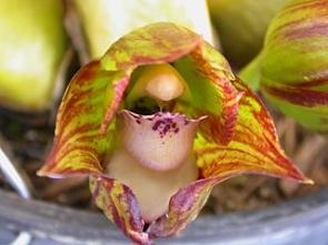 Pěstování orchidejí podle Jany