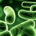 Probiotika nastřeva