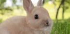 Zakrslý králík - nemoci