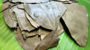 Bobkový list vkvětináči