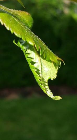 Kroucení listů