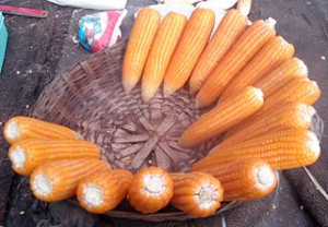 Zavařování kukuřice
