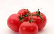 Septoriová skvrnitost rajčete