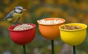 Krmítka pro ptáky