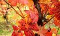 Kalendář pro vinaře - listopad