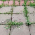 Likvidace plevele octem