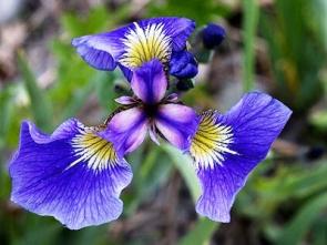 Jednoděložné rostliny