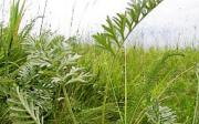 Nekvetoucí rostliny, které čistí vzduch