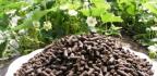 Složky hnojiv
