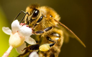CSV - Český svaz včelařů